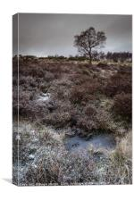 Winter Hawthorn, Canvas Print