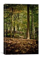 Autumn Woodland Walk, Canvas Print
