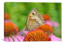 Meadow Brown Butterfly, Canvas Print
