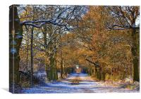 Winter Woodland, Canvas Print
