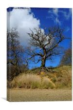 Tree on the Orwell, Canvas Print