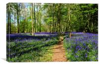 Bluebell Wood , Canvas Print