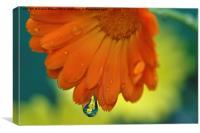 Marigolds, Canvas Print