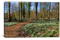 Snowdrop Woodland