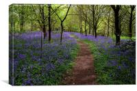 Suffolk Bluebells , Canvas Print