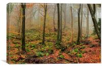 The Forest of Dean, Canvas Print
