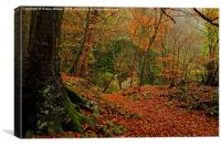 Lords Wood Forest of Dean, Canvas Print