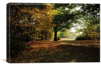 Epping Forest in Autumn, Canvas Print