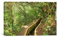 Ribeiro Frio Levada path, Madeira, Canvas Print