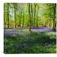 English Bluebell Wood, Canvas Print