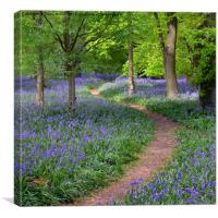 Winding Bluebell path, Canvas Print
