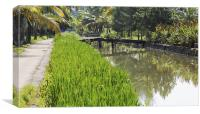 lush rice fields and waterways, Canvas Print