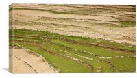 Layered Kashmir Paddy field Patterns, Canvas Print