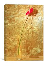 Red single petal tropical flower bud vase, Canvas Print