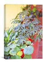 Hidden Plant Pots, Canvas Print