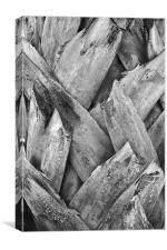Tonal Royal Coconut Palm Bark Texture, Canvas Print