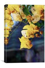 Bougainvillea Orange Leaves, Canvas Print