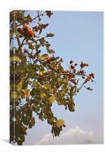 Orange blossom of Mahuva Kesuda, Canvas Print