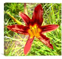 Asialic Lily, Canvas Print