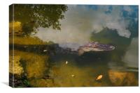 Alligator Daytime Resting, Canvas Print