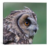 Watchful Owl in Profile, Canvas Print