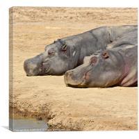 Happy Hippos, Canvas Print