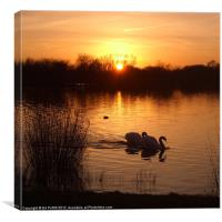 Swan Couple at Sunset, Canvas Print