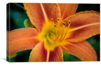 Flora Orange, Canvas Print