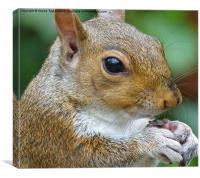 A Squirrel Feeding, Canvas Print