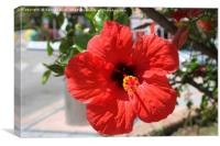 Red Hibiscus Beauty, Canvas Print