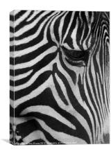Stripes the Zebra, Canvas Print