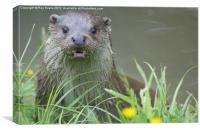 Startled Otter, Canvas Print