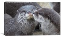 Kissing Otters, Canvas Print