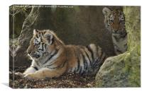 Two tiger cubs, Canvas Print