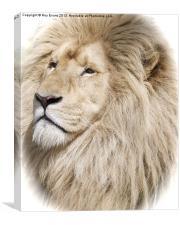 White Lion portrait, Canvas Print