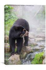 Speckled Bear in the waters mist, Canvas Print