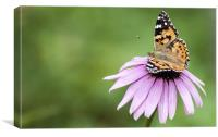 Butterfly on Cornflower, Canvas Print