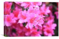 Pink beauty, Canvas Print