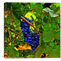 Castle Grapes, Canvas Print