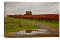 Autumn Vineyard Rain, Canvas Print