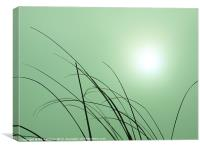 Misty Morning Sunrise, Canvas Print