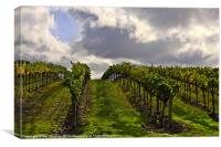 Storm Sky Vineyard, Canvas Print