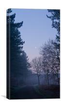 Dawn at Haw Park Wood, Canvas Print