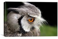 Peanut the Owl, Canvas Print