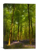 Embley Wood Bluebells, Canvas Print