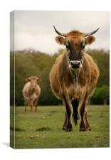 Grumpy Cow, Canvas Print