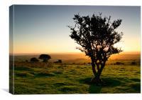 Dartmoor Sunset Tree, Canvas Print