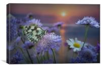 Marbled White Butterly at sunset, Canvas Print
