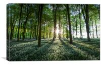 Wild Garlic Sunset at Wildhams Wood, Canvas Print