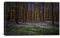 Bluebells and Wild Garlic in Wildhams Wood, Canvas Print